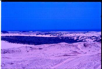 חוף השלה