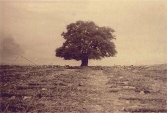 Tree 1947abs