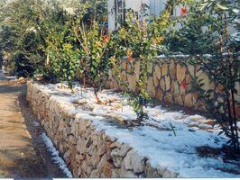 Snow a kdumim 13