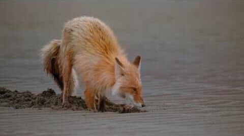 IMAX_Alaska_Spirit_of_the_Wild_1997