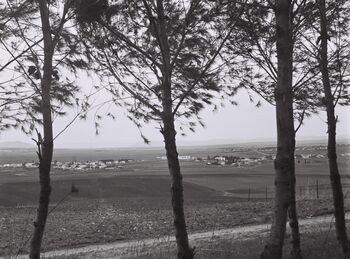 VIEW OF THE JEZREEL VALLEY AS SEEN FROM KIRIAT TIVON. נוף של עמק יזרעאל.D835-070