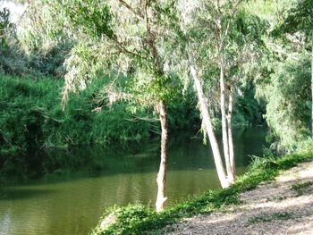 Hedera river