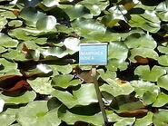 Orto botanico di Napoli 02