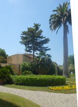 Orto Botanico di Pisa palma dei cile C