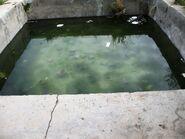 Han E- Luban the pool
