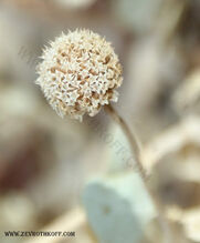 צמח לא ידוע