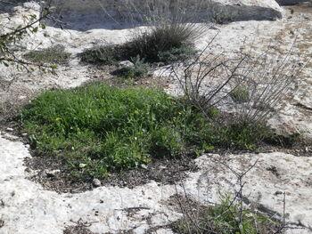 Ancient agricultural facilities givat rhashi kdumim 01