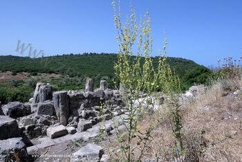 בוצין דמשקאי
