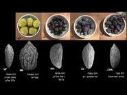 פרופ' אהוד ויס – ירושלים של סביבה- צמחים מקרוב ומרחוק לאורך הדורות