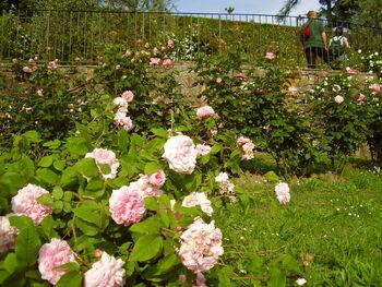 Giardino delle rose 3