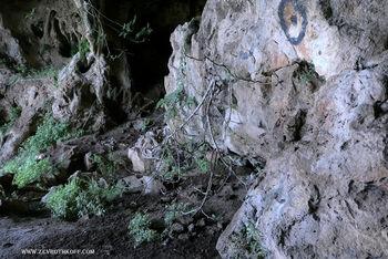 תאנה במערת הרקפת
