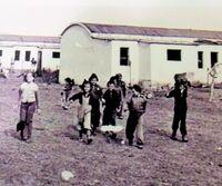 Nechalin 1948a