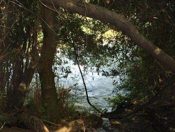 The springs of River Jordan near Tel Dan