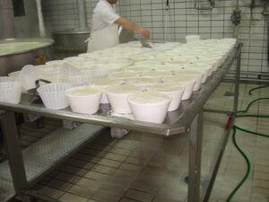 Capra aegagrus formagio da Sardegna