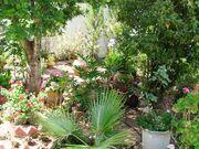 Garden in Kedumim Shomron1.jpg