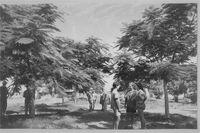 מקווה ישראל - בית הספר החקלאי-JNF003784