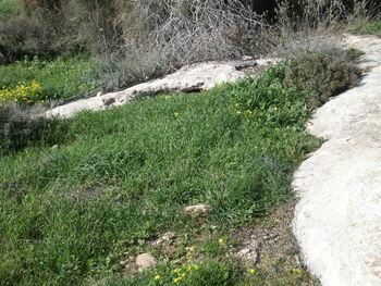 Ancient agricultural facilities givat rhashi kdumim 02