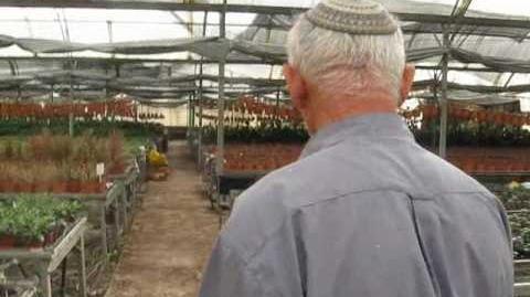 Nursery_for_growing_flowers_Meira_Kdumim_משתלת_מאירה_קדומים.wmv