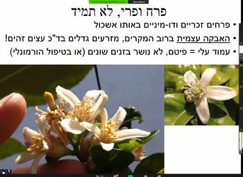 פרחי אתרוד כפר חבד