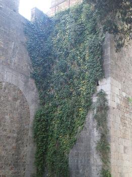Cimiterio-ebraico-di-pisa-2015 18776683215 o