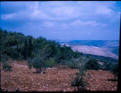 הר הכרמל 555
