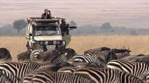 ►_Serengeti_-_The_Adventure_(Full_Documentary,_HD)-1585493636
