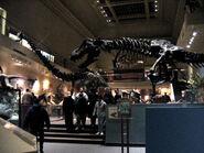 NMNH Hall of Dinosaurs