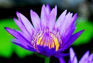Flickr - JennyHuang - Flower in Bali-1