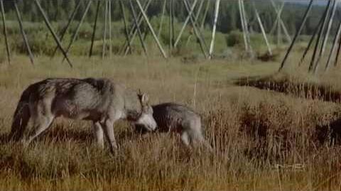 IMAX_Wolves_1999_subtitulos_español