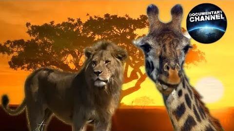 WILDLIFE_IN_SERENGETI_Wild_animals_Serengeti_National_Park