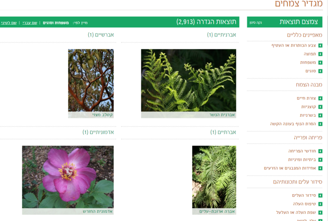 מ גדיר צמחים דנין.png