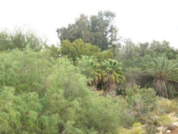 Ezuz forest