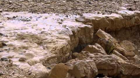 Flash_Floods_in_Wadi_Peres_שיטפונות_נחל_פרס_נשיא_נחלי_הנגב