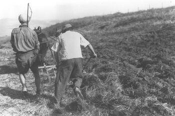 MEMBERS OF KIBBUTZ TIRAT ZVI PLOUGHING THE FIELD. חברי קיבוץ טירת צבי חורשים בשדות הקיבוץ.