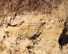 Sulfur Quarry of Beeri 1980 18