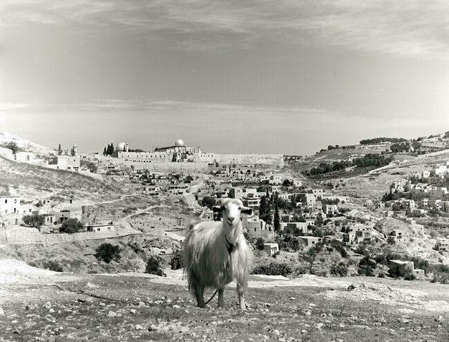 VIEW OF THE OLD CITY OF JERUSALEM AS SEEN FROM BEN HINOM VALLEY, IN THE 1930'S. מראה כללי של העיר העתיקה בירושלים במבט מ גיא בן הינום בצילום מאמצע שנD728-076