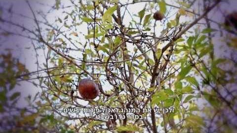 """ט""""ו_בשבט_חשיבותם_של_העצים_לתרבות,_לכלכלה,_לאיכות_חיינו_ולזהותנו_היהודית"""