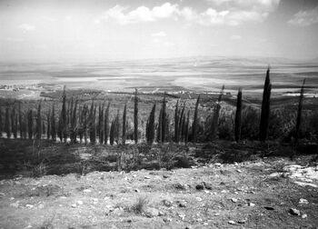 VIEW OF THE JEZREEL VALLEY. נוף של עמק יזרעאל.D403-161