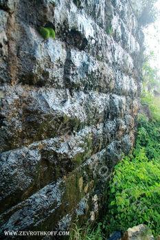 עים על קציה חומה
