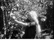 Orange fruits petach tikva 1926