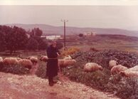 PikiWiki Israel 13578 Animal Industries at Kibbutz Ramat Yohanan