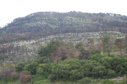 Bat Shlomo view of har horshan