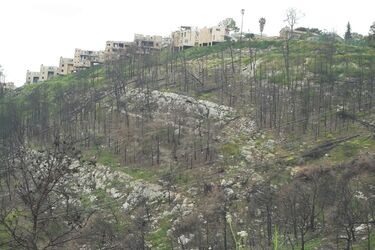 Mount Carmel forest after fire 2010 to beth oren