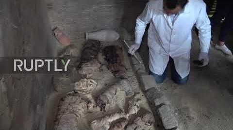 Egypt_Mummified_cats,_scarab_beetles_discovered_in_ancient_tombs_near_Cairo