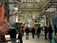 NMNH Hall of Mammals