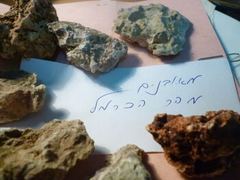 Fossils from the slopes of Mount Carmel beach 03