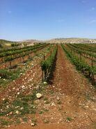 Domaine Ventura Winery2