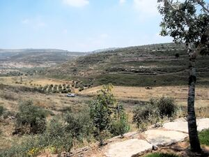 Lesnes olive kdumim from mitzpe isai