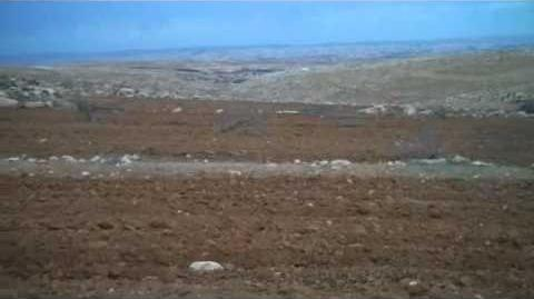 Destruction_of_trees_in_the_settlements_הרס_מטעים_בהתנחלויות
