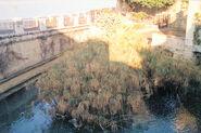 The Papyrus Pool fonte aretusa